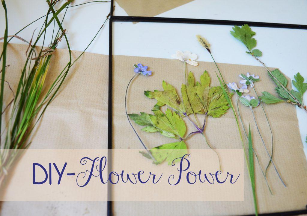 Blütenzauber für zu Hause – gepresste Blumen im Rahmen