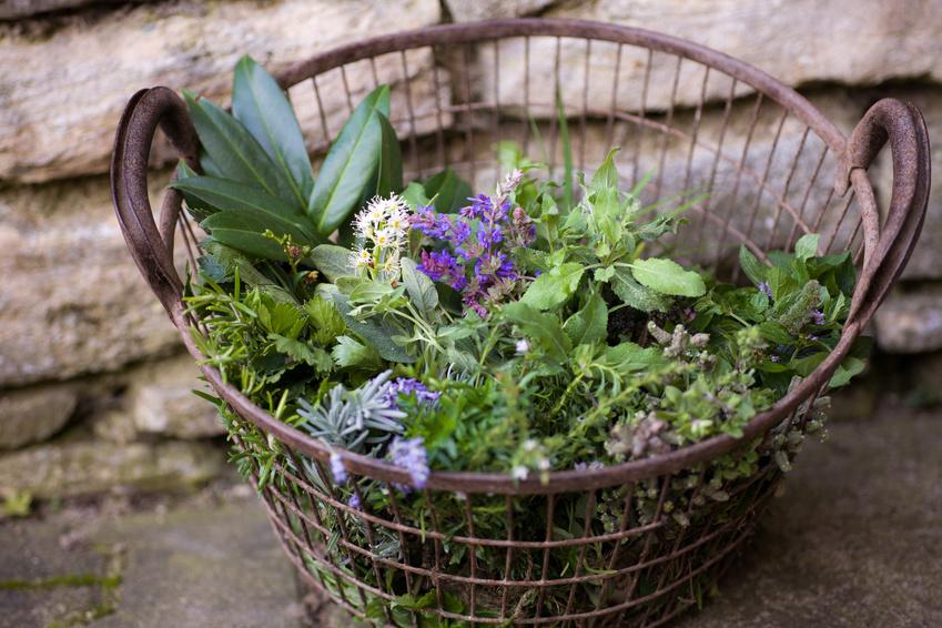 Tipps zum Kräuter sammeln aus dem Kräuterdorf Irschen