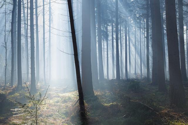 Der Wald – eine Ressouce für unsere Gesundheit